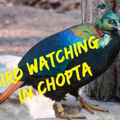 Bird Watching in Chopta