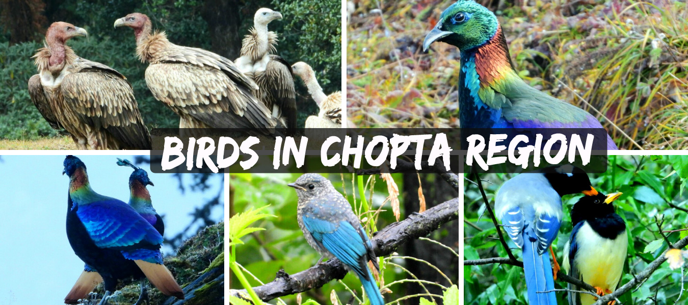 Camping & Trekking in Chopta