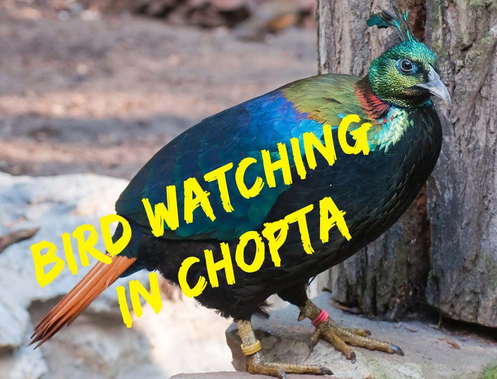 Bird Watching in Chopta Region
